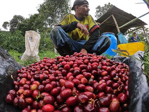 Colombia Finca Las Margaritas Sudan Rume