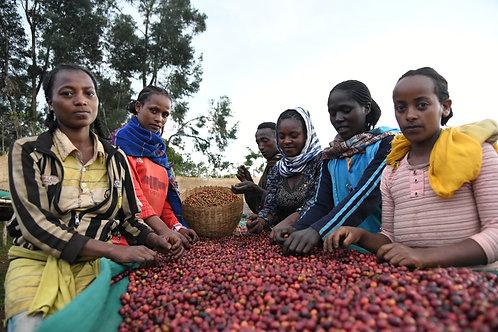 Ethiopia Biloya Jabanto Kochere Gr1