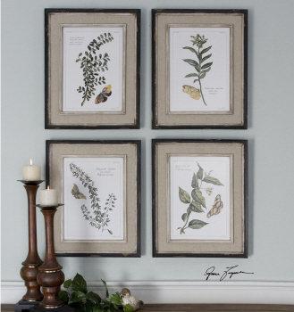 Butterfly Plants, Set of 4