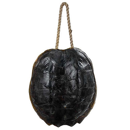 Turtle Shell Accessory