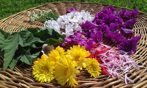 Heilpflanzen sammeln.jpg