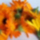 Ringelblume_edited.jpg