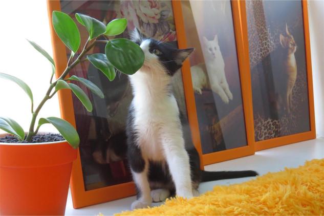 Кот черный белый цветок КотКурорт
