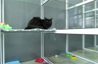 Номера для кошек в гостинице КотКурорт