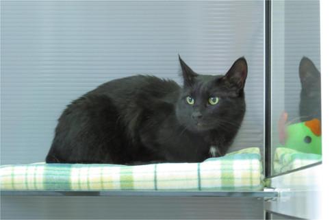 Кот черный номер для кошек в гостинице КотКурорт