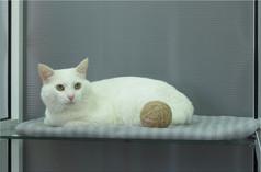 Кот белый номер для кошек в гостинице КотКурорт