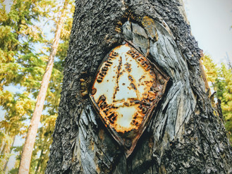 What Hiking 2,000 Miles Feels Like - PCTA.org