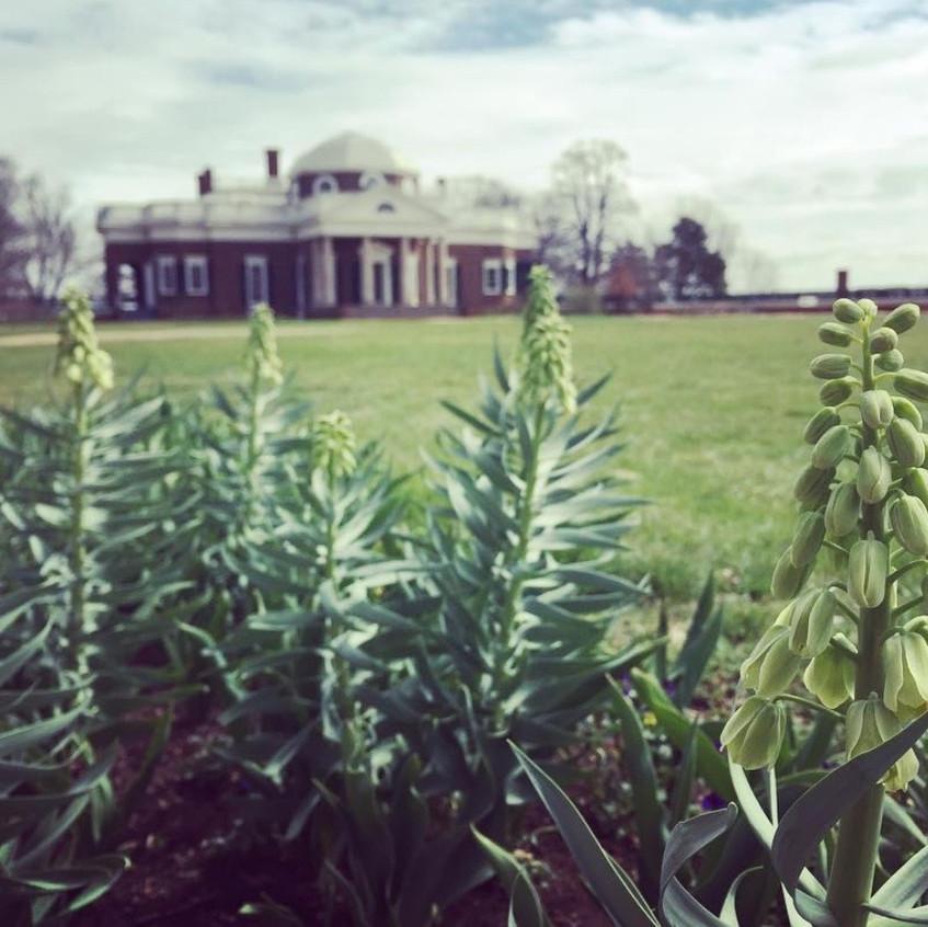 Spring at Monticello 2
