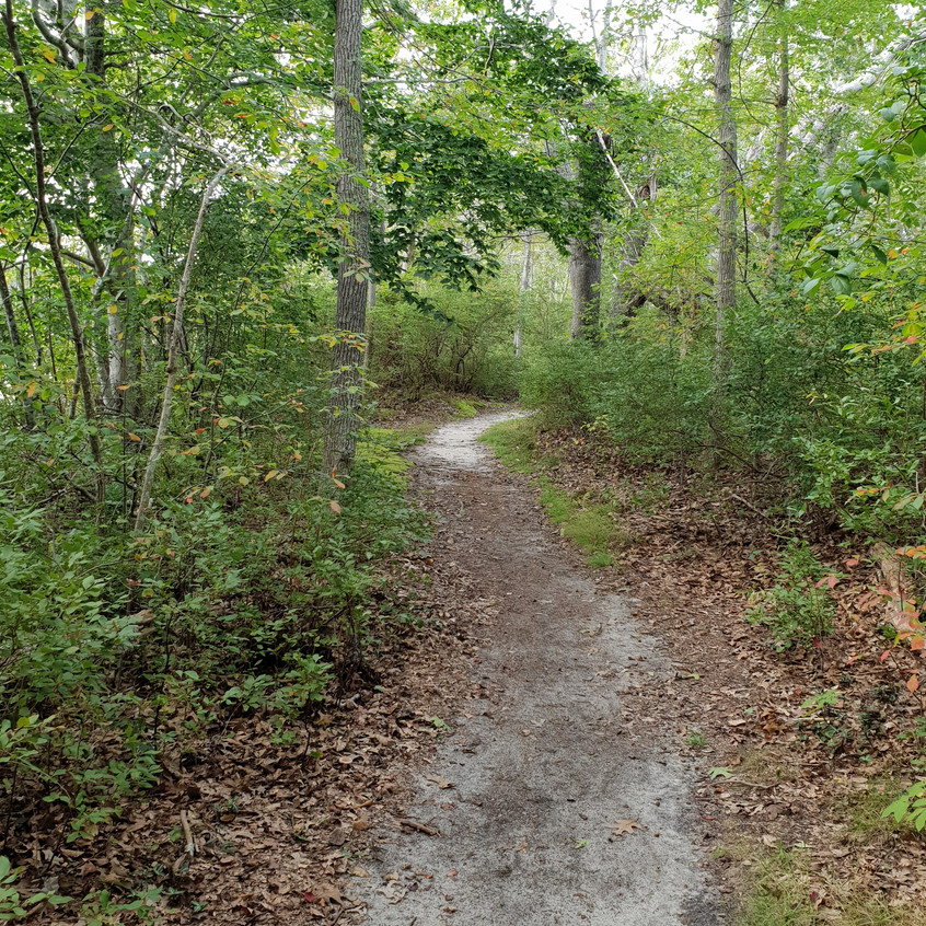 The trail - Kathryn Aalto - scenes from the trail, courtesy of the author, all rights reserved.