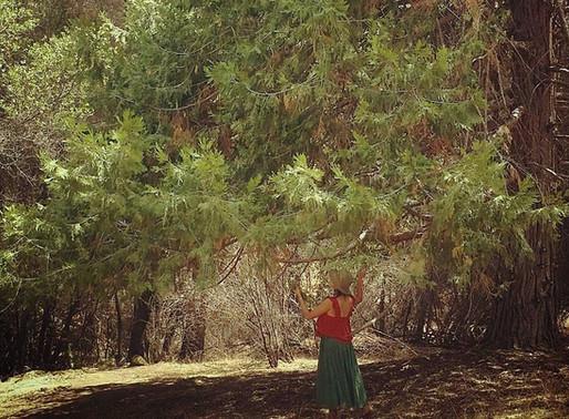 NURTURING PLANT POWER with MAMA MAIZ