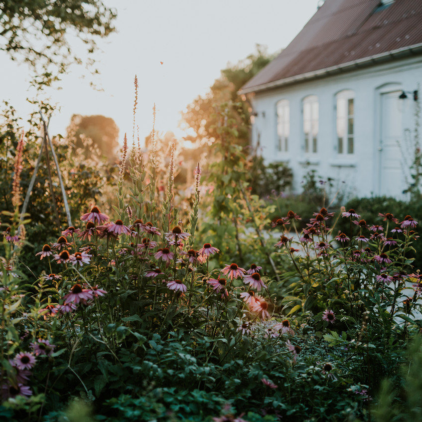 Wild Garden Life - Scenes from Sigridsminde - Images all by Camilla Jorvad. All Rights reserved.