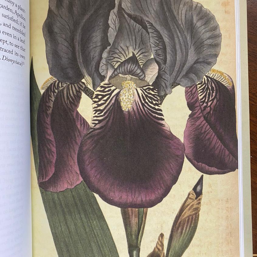 Metamorphoses - Botanical Mythology 4 - from The Imagination of Plants, by Matt Hall. Courtesy of Matt Hall.