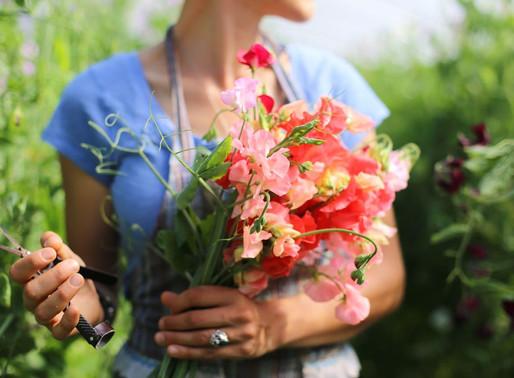 REVISITING THE CUT FLOWER GARDEN