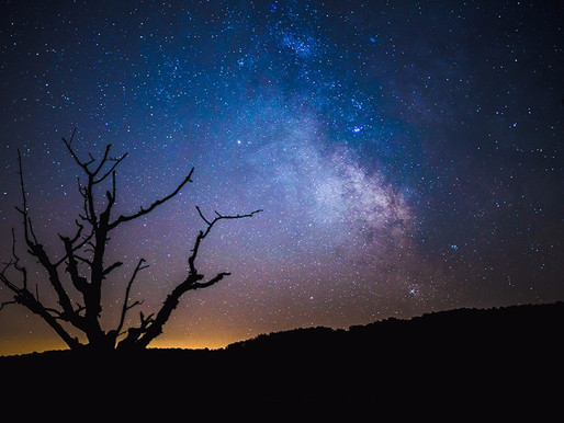 IN THE NIGHT GARDEN, A PRE-SOLSTICE CONVERSATION WITH THE INTERNATIONAL DARK-SKY ASSOCIATION