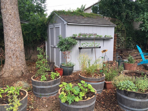 URBAN HOMESTEADING AND A GARDEN JOURNEY