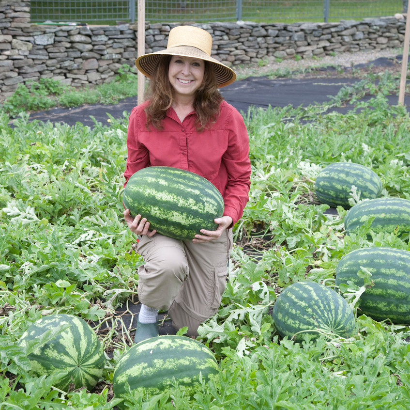 Amy Goldman in the melon field, from The Melon - written by Amy Goldman, photos by Victor Schrager, all rights reserved.