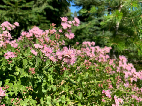 PLANTS FOR LIFE LONG LEARNING & PLACE: AUGUST, A VIEW FROM HERE