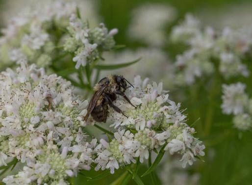 NAVIGATING BY PLANTS: ULI LORIMER & THE NATIVE PLANT TRUST