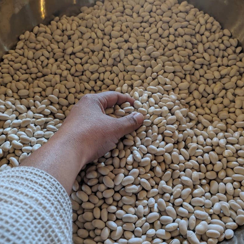 Potato Beans Sierra Seeds