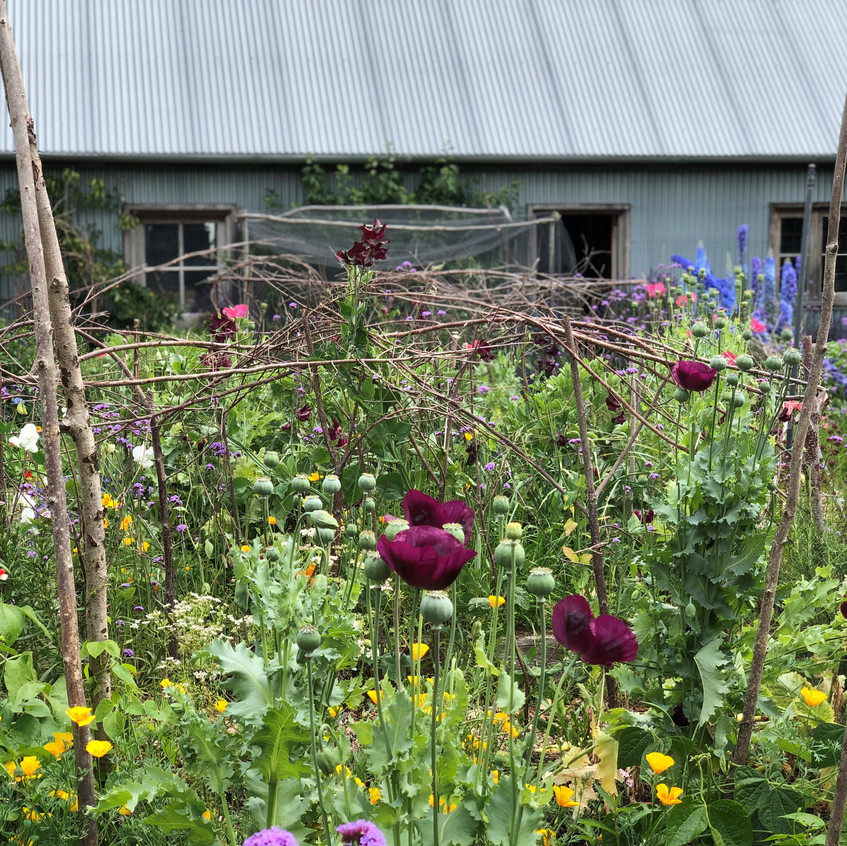 Images from the Barn Garden, as designed and tended by Tom and Sue Stuart-Smith. All rights reserved.