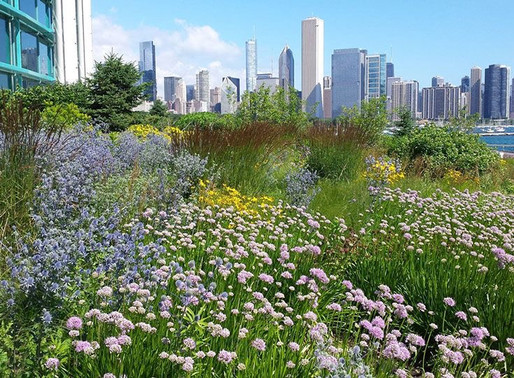 THE MIGRATORY BIRD GARDEN & MORE HABITAT, THE SHEDD AQUARIUM with CHRISTINE NYE