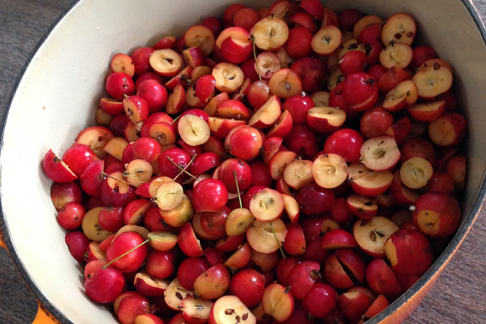 Crabapples becoming something sweet...photo by Sara Bir, all rights reserved.