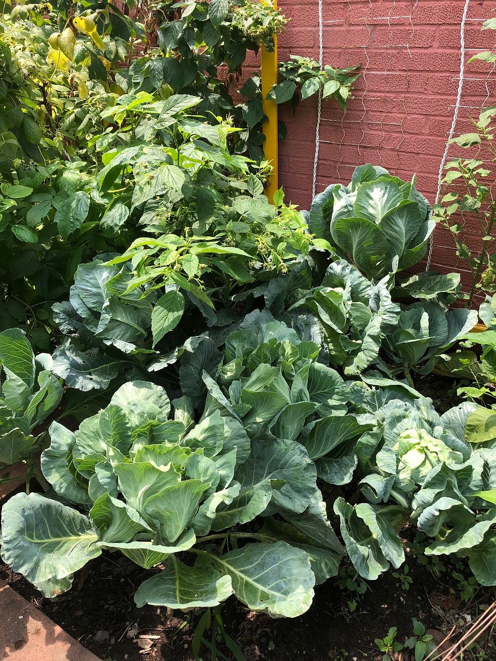 A VERY Green Block in Brooklyn. Photo courtesy of The Brooklyn Botanic Garden.