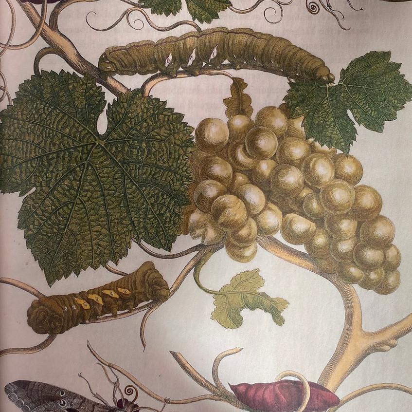 Botanical Mythology 2 - from The Imagination of Plants, by Matt Hall. Courtesy of Matt Hall.