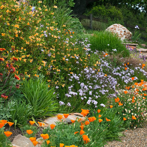 GARDENING IN SUMMER DRY CLIMATES with PHOTOJOURNALIST SAXON HOLT