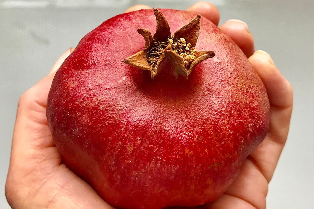 The pomegranate is a favorite and symbolically rich fruit for gardener and journalist Laura Christman. Photo by Jennifer Jewell, all rights reserved.