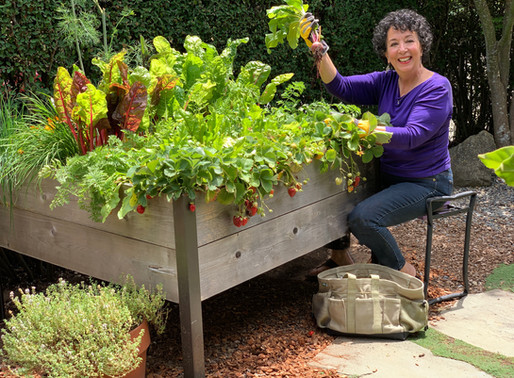 THE LIFELONG GARDENER, TONI GATTONE