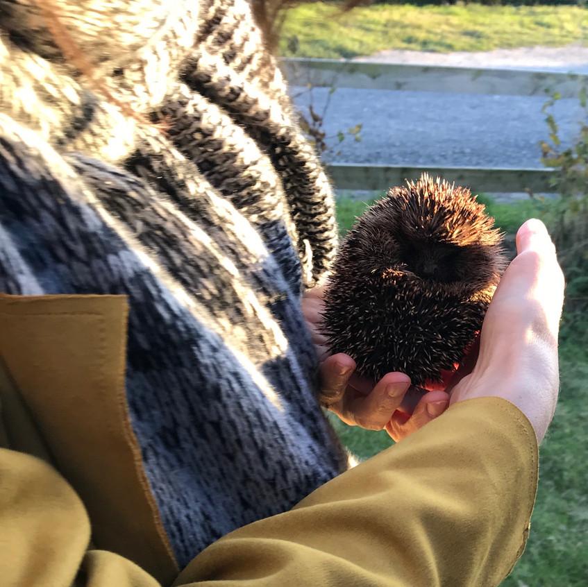 hedgehog and mary