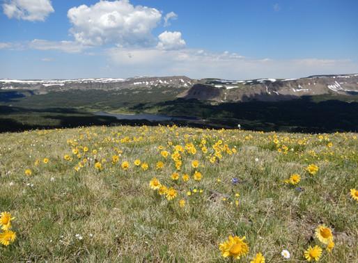 HIGH GROUND: PENSTEMONS & OTHER ALPINE PLANTS, MIKE KINTGEN, CURATOR OF ALPINE PLANTS, DENVER BO