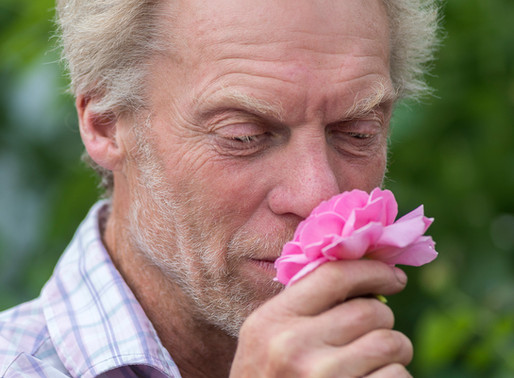 THE COMFORT OF ROSES, with MICHAEL MARRIOTT, DAVID AUSTIN ROSES