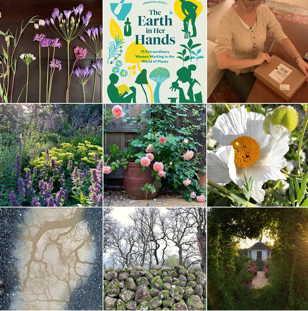 My top posts on Instagram in 2019 show my priorities - may they just get greener and more literate.