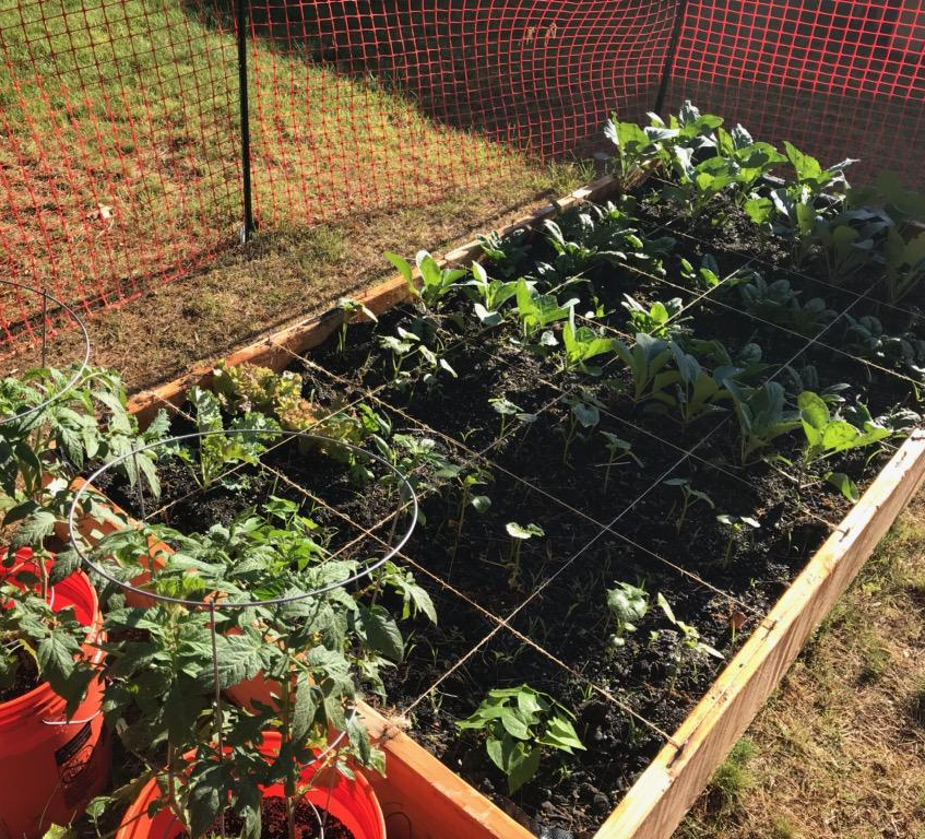 UFI to build 100 grow boxes in Roxbury, Dorchester and Mattapan. Images courtesy of Urban Farming Institute, All rights reserved.