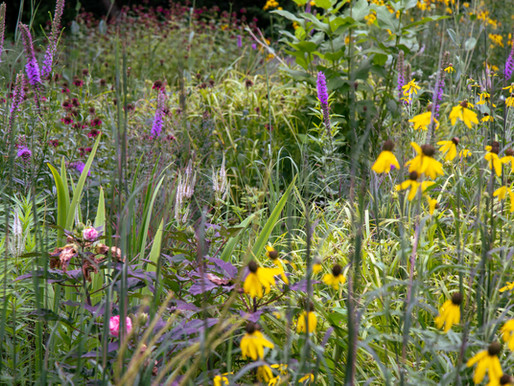 NEW NATURALISM with PLANTSMAN KELLY NORRIS