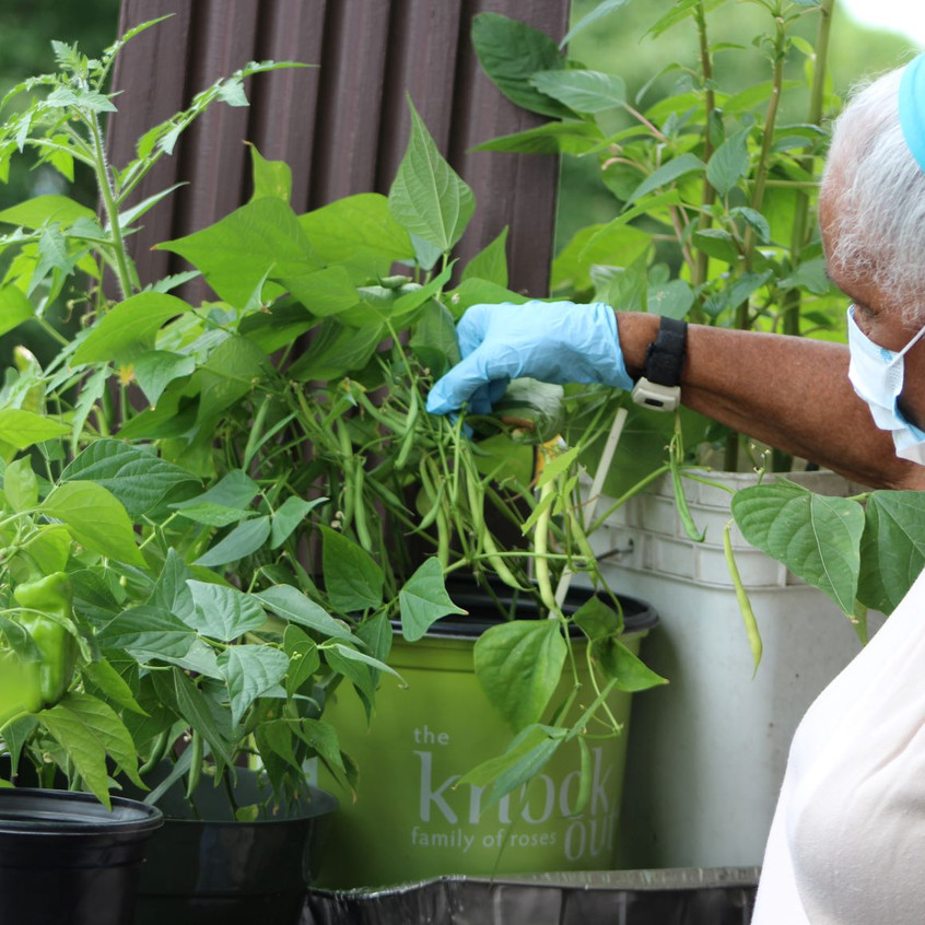 90 years young and growing a porch garden; Image courtesy of Urban Farming Institute