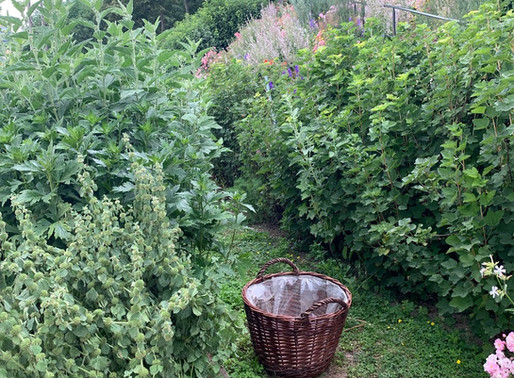 A GARDENER WAS HERE: JULY, A VIEW FROM HERE