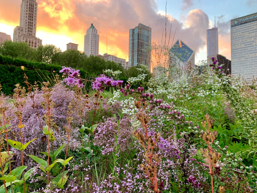 GARDENS IN TIME & SPACE: LAURA EKASETYA, LURIE GARDEN, CHICAGO