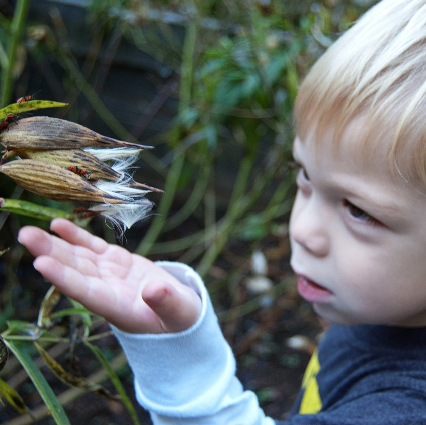 Child and Milkweed Friends