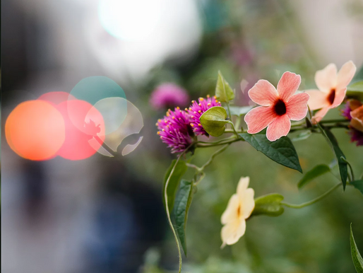 SLOW FLOWERS FOR THE SUMMER (& LIFE), with DEBRA PRINZING