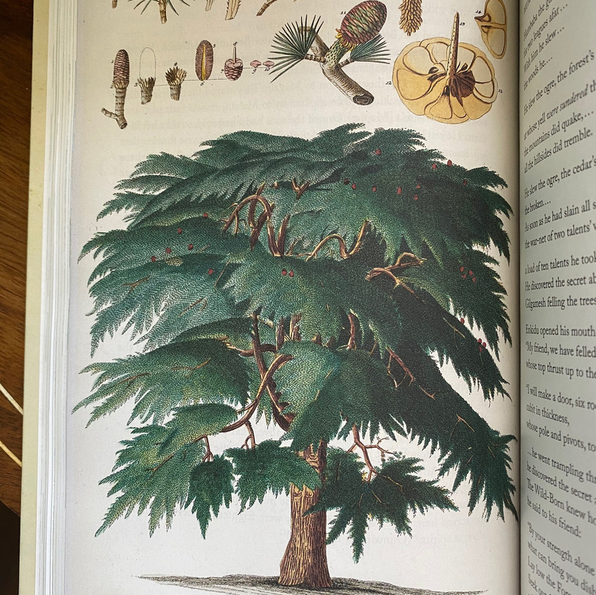Tree Stories - Botanical Mythology - from The Imagination of Plants, by Matt Hall