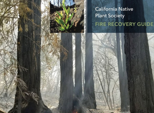FIRE RECOVERY GUIDE, WITH JULIE EVENS AND GREG SUBA of THE CALIFORNIA NATIVE PLANT SOCIETY