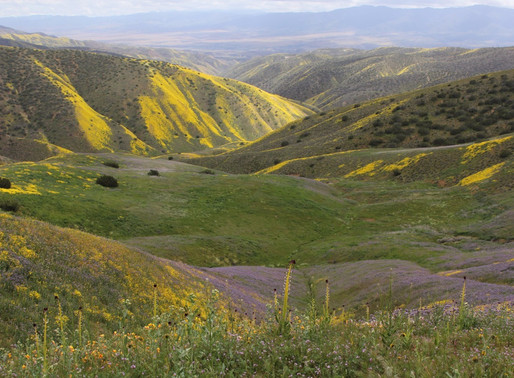 CALIFORNIA NATIVE PLANT SOCIETY'S CONSERVATION CONFERENCE 2018