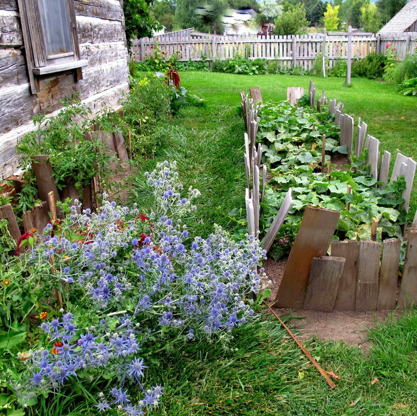 Homestead Vegetable garden