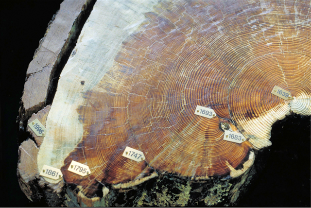 Tree Rings, Fire Scars & other tales