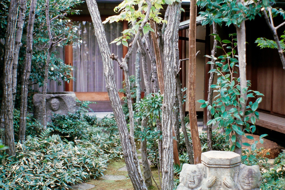 A Kyoto Garden with carefully pruned trees and shrubs for open yet naturalistic views. Photo courtesy of Leslie Buck.