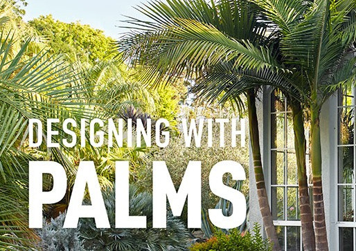 DESIGNING WITH PALMS, with JASON DEWEES