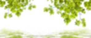 AdobeStock_245953444.jpeg